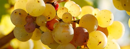 vollenweider_fruchtsuess_2